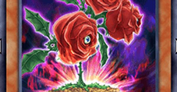 返り咲く薔薇の大輪の評価と入手方法