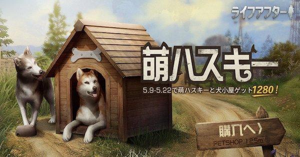 ハスキー犬が登場?最新アプデ情報!【5/9】