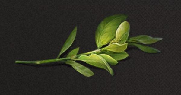 小さな芽の入手方法