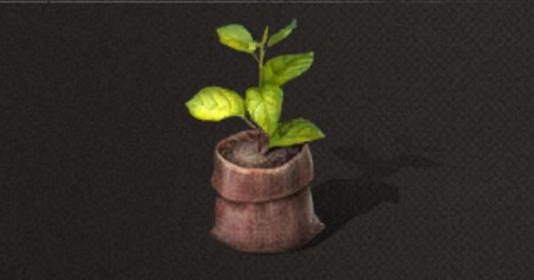 小さな苗木の入手方法と使い道