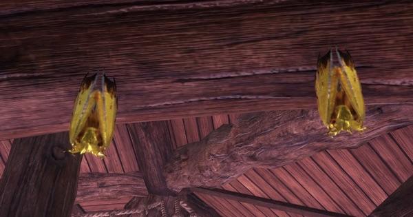 コンジキウロコウモリの居場所と捕まえ方
