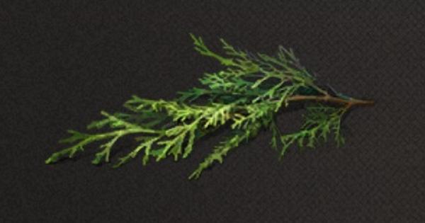 カシワの葉の入手方法と使い道