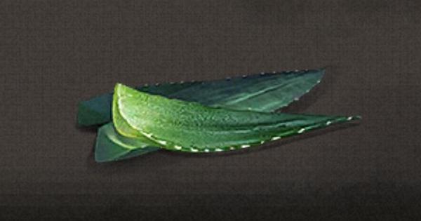 サイザルアサの葉の入手方法と使い道