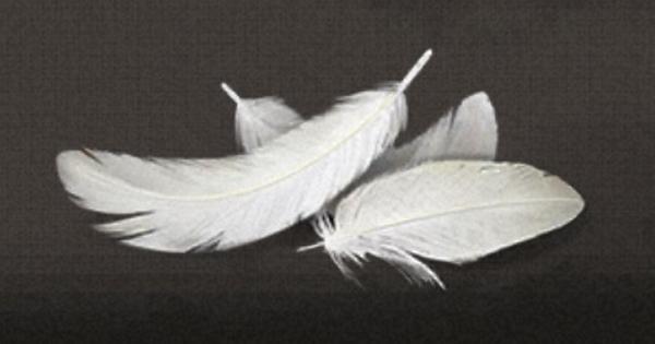 家禽の羽の入手方法まとめ