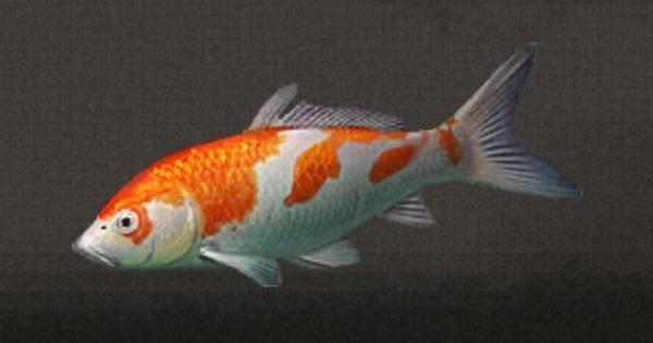 鯉の入手方法・詳細情報