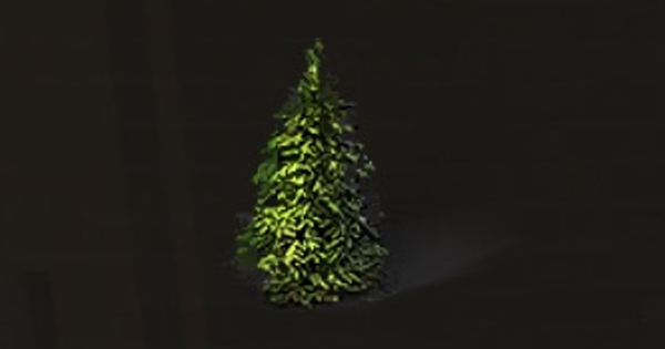 モミの木の入手方法まとめ
