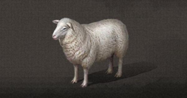 羊の入手方法まとめ