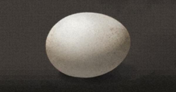 卵の入手方法と使い道