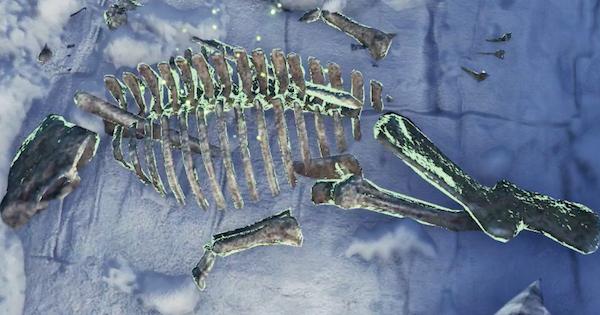 骨素材の入手方法と対象モンスター   骨の種類と一覧
