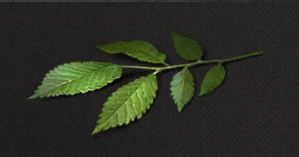 楡の葉っぱの入手方法と使い道
