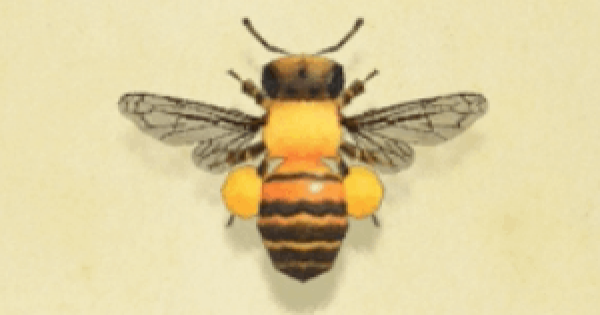 ミツバチの値段と捕まえ方・出現時間