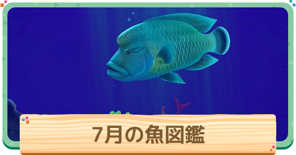 あつもり 魚 7月