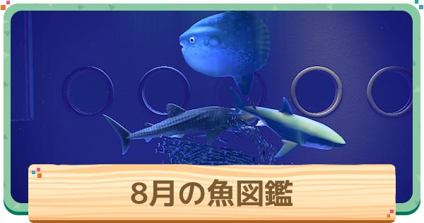 あつ森 魚 八月