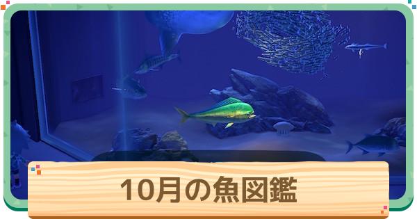 10月の魚