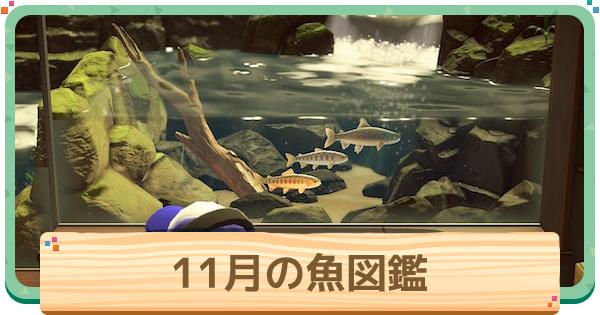 魚 図鑑 一覧 あつ 森 (あつ森)島で釣れる魚 月別一覧|ダイコンブ