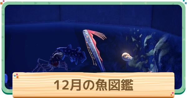 12月の魚一覧 | 値段と出現時間・場所