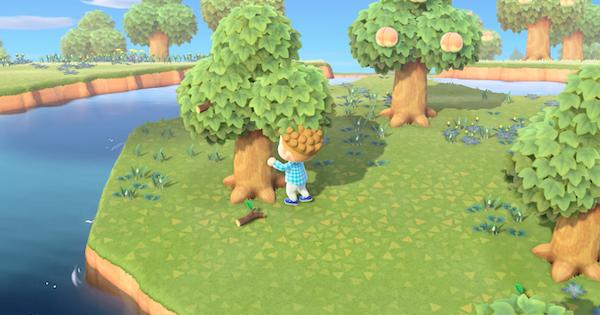 木材 あつ 集め 方 森