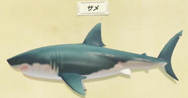 あつ森 サメ タイミング