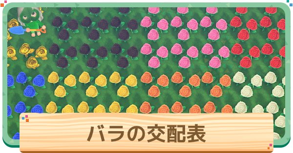 バラの交配表と色の種類