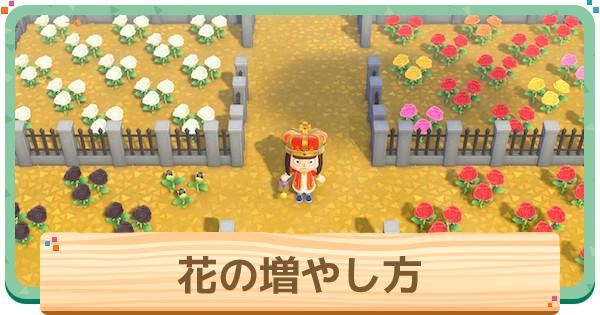 花の増やし方と摘み方 植え替え方法