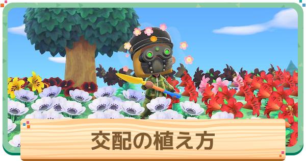交配の効率的な植え方   レア花を作るコツ