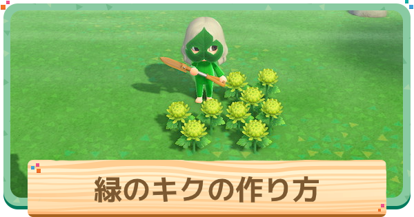緑菊(キク)の作り方と増やし方|確率検証