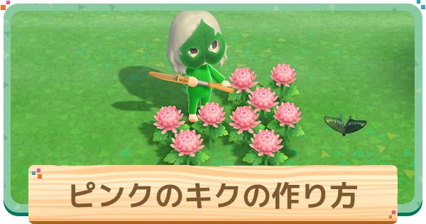 ピンクの菊(キク)の作り方と増やし方 確率検証