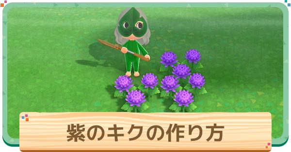 紫菊(キク)の作り方と増やし方