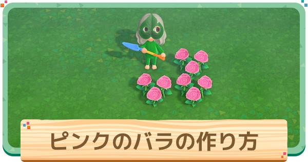 ピンクのバラの作り方と増やし方