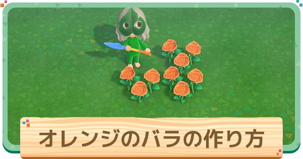 オレンジのバラの作り方と増やし方