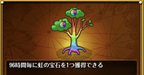 虹の実の木の解説とおすすめ度