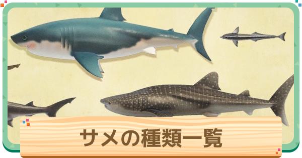サメの種類一覧と値段 | 背びれ島への行き方
