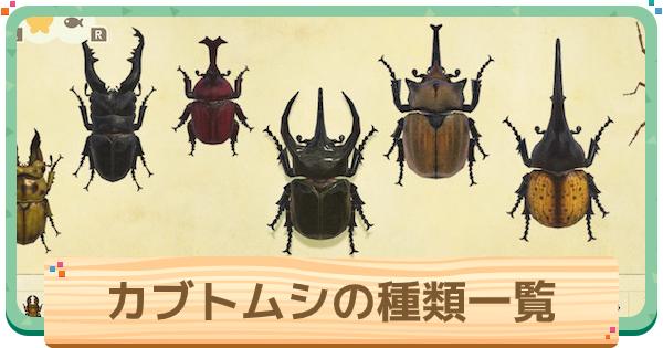 カブトムシの種類一覧と値段 | 離島での捕まえ方