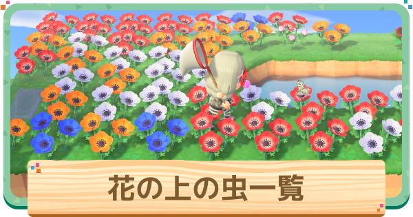 花の上で採れる虫一覧|種類・値段