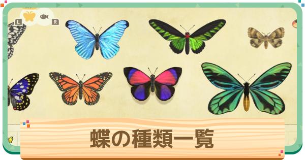 蝶の種類一覧と値段 | 離島での捕まえ方