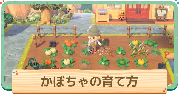 かぼちゃの植え方とレシピの集め方