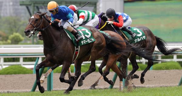 マーメイドS(G3)ではウマ娘血統の馬が8頭出走