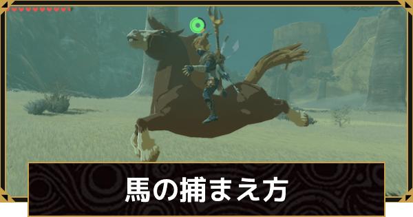 馬の捕まえ方