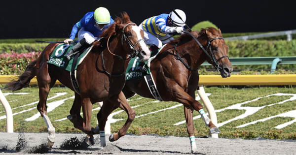 6/20のユニコーンS(G3)に4頭のウマ娘血統の馬が出走!
