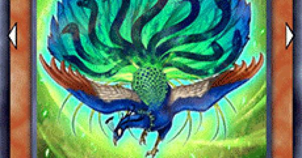 九蛇孔雀の評価と入手方法