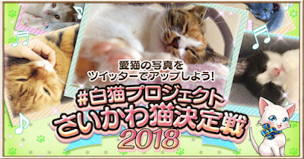 さいかわ猫決定戦2018最新情報