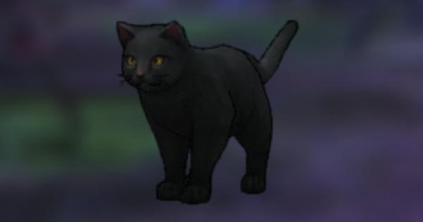 ネコの評価とスキル/装備