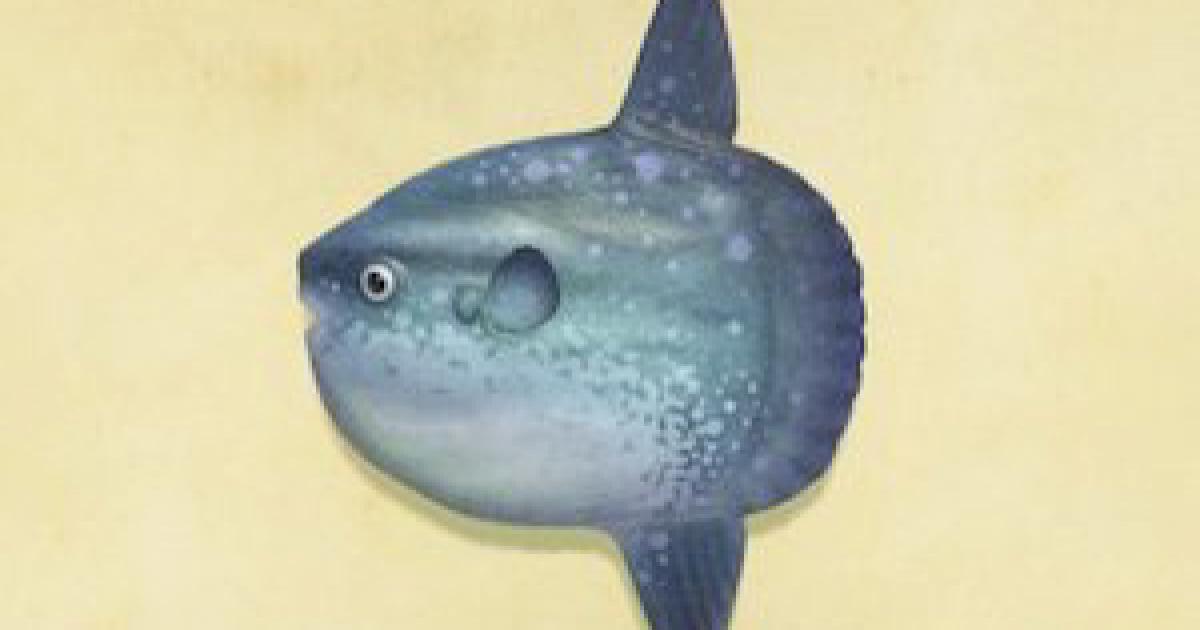 時間 サメ あつ 森