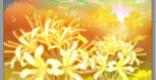 天上花の性能 | 補助スキル