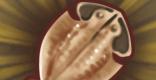 サンド干物のレシピ情報