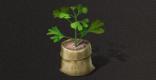 イチョウの苗木の入手方法と使い道
