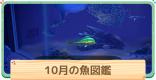 10月の魚一覧 | 値段と出現時間・場所