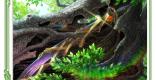 霊樹の神剣のカード情報と評価