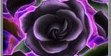 黒花執念の評価と性能 | 後衛スキル