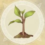 大樹の苗木
